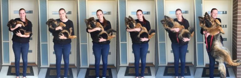 Самые популярные породы собак с фотографиями
