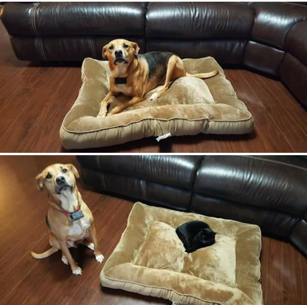 Картинки по запросу Коты которые украли собачью постель